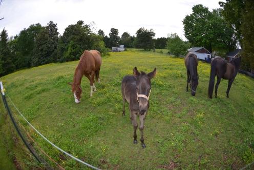 Horses foal Winston Salem 20130507 _0345