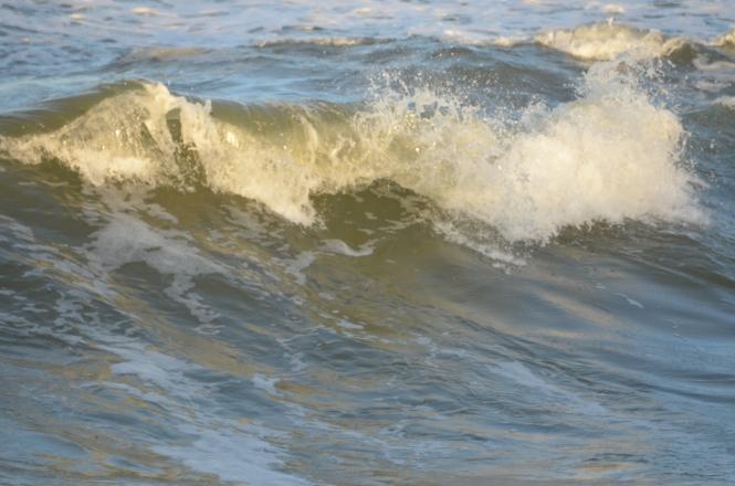 St Augustine Bryn Mawr Dogs Taco Flagler Beach 20171112_4903
