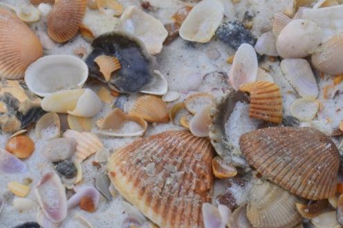 St Augustine Bryn Mawr Macro 20171110_6725 Shells